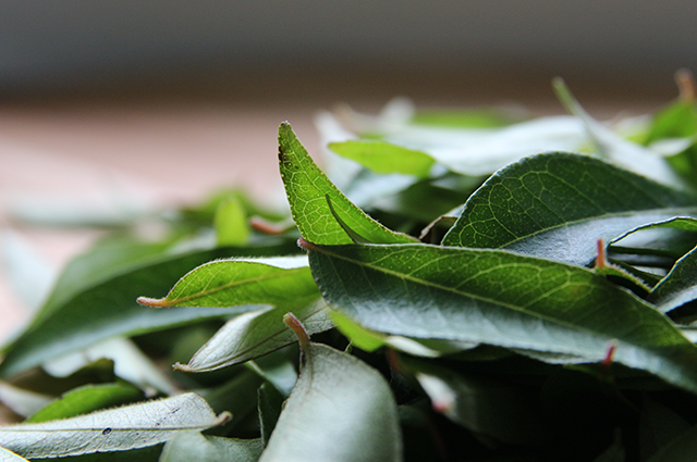 Wonderful fresh curry leaves.